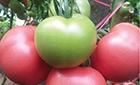 早春西红柿3大美容功效